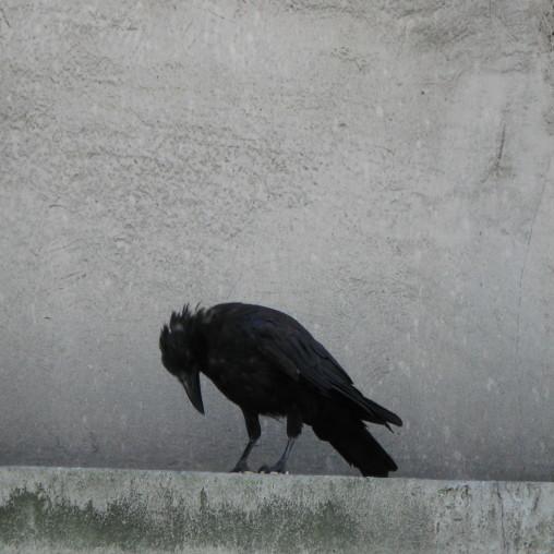 Crow, Notre Dame, Paris, 2010.